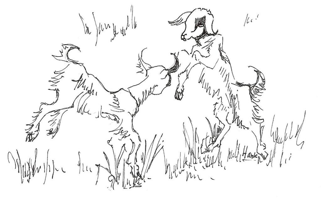 Springende geitjes